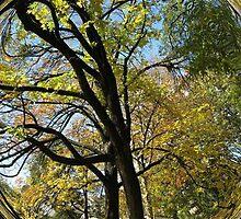 WeatherDon2.com Art 277 by dge357