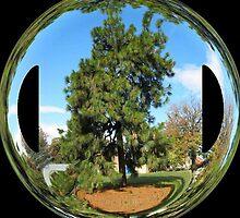 WeatherDon2.com Art 281 by dge357