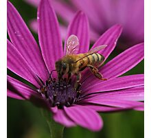 Bee July 2012 Photographic Print