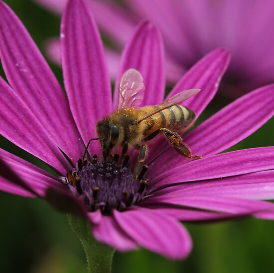 Bee July 2012 by saharabelle