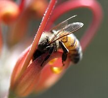 Bee August 2012 by saharabelle