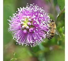 Bee September 2012 Photographic Print