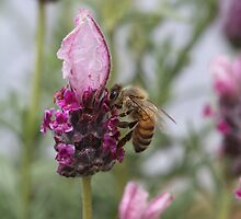 Bee November 2012 by saharabelle