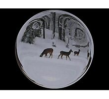Cindy's Snow Globe's 8 Photographic Print