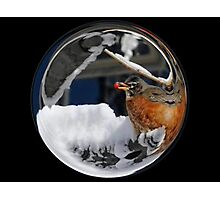 Cindy's Snow Globe's 10 Photographic Print