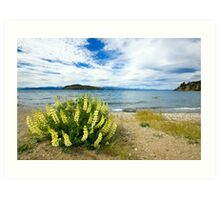 Lupins & the Lake, Bariloche, Argentina Art Print