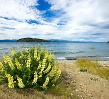 Lupins & the Lake, Bariloche, Argentina by strangelight