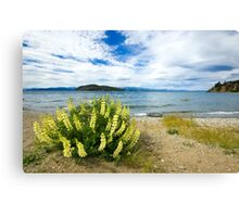 Lupins & the Lake, Bariloche, Argentina Canvas Print