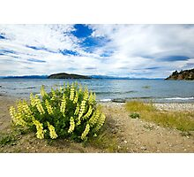 Lupins & the Lake, Bariloche, Argentina Photographic Print