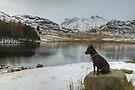 The Dog In Winter by VoluntaryRanger