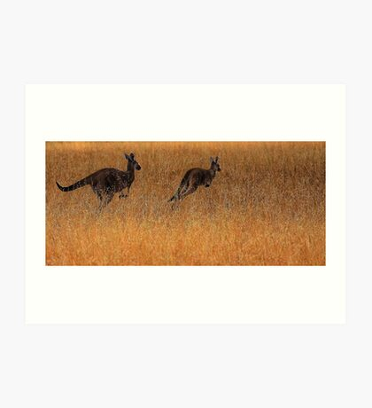 Kangaroos in Flight Art Print