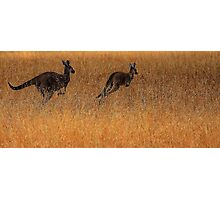 Kangaroos in Flight Photographic Print