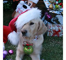 Golden Retriever with droopy Christmas Hat Photographic Print