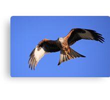 Red Kite in the Black Mountain (Llanddeusant), Brecon Beacons Canvas Print