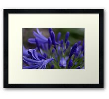 High On Agapathus Framed Print