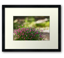 A Patch of Pink Framed Print