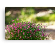 A Patch of Pink Canvas Print