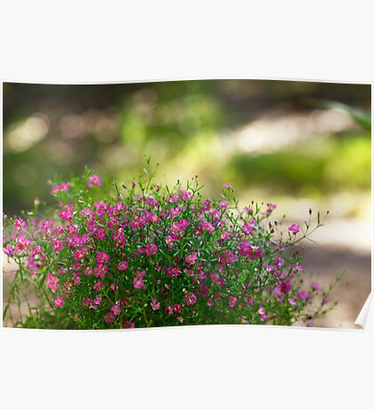 A Patch of Pink Poster