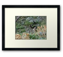 You Following Me? Framed Print