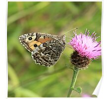 Grayling Butterfly on Knapweed, Ystrad Mynach (South Wales) Poster
