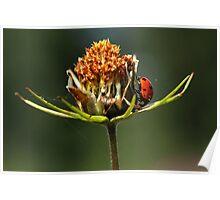 The Ladybird. Poster