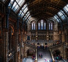The Natural History Museum by Alan E Taylor
