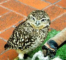 Baby Owl by shelleybabe2