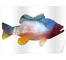 Perch  Poster