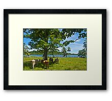 Cows. Framed Print