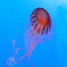 Jellyfish series 5 by andytechie