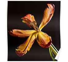 Parrot Tulip 3 Poster