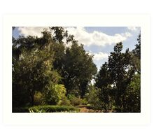 Old Flordia Nature Trail Art Print