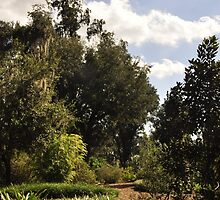 Old Flordia Nature Trail by Shawnuffdigital