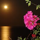 The coloured Bougainvilleas, the Pacific Ocean and the full Moon - Las Buganvillas de colores, el Oceano Pacifico y la Luna llena by Bernhard Matejka