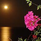 The coloured Bougainvilleas, the Pacific Ocean and the full Moon - Las Buganvillas de colores, el Oceano Pacifico y la Luna llena by Bernhard Matejka