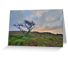 Dartmoor: The Lone Tree at Maiden Tor Greeting Card