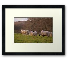 Dartmoor: The Deer With an Identity Crisis Framed Print