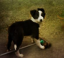 I'm ony helping to sweep the path  -- I'm not chewing the broom -honest mum by hampshirelady