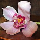 Purple orchid flower at small vintage table by Anton Oparin
