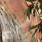 Back to Thredbo - Colours of the Gums by Sally Haldane