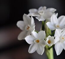 Paperwhites by MaryLynn