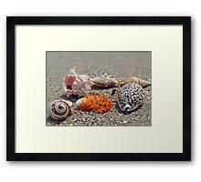 Seashells on the sand at the ocean beach Framed Print