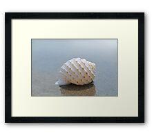 Seashell on the sand at the ocean beach 7 Framed Print