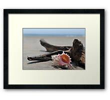 Seashell on the sand at the ocean beach Framed Print