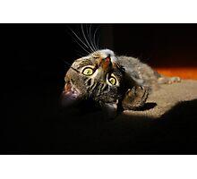 Upside Down Cat Photographic Print