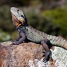 Water Dragon  by DaveBassett