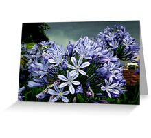 Agapanthus Before a Storm Greeting Card