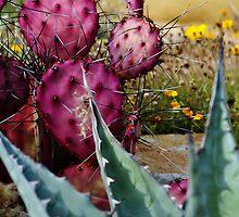 Purple Cactus by levipie