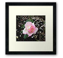 RBC Pink and Sepia  Framed Print