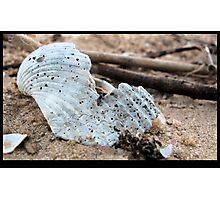 Macro Study: Cockle Shell  Photographic Print